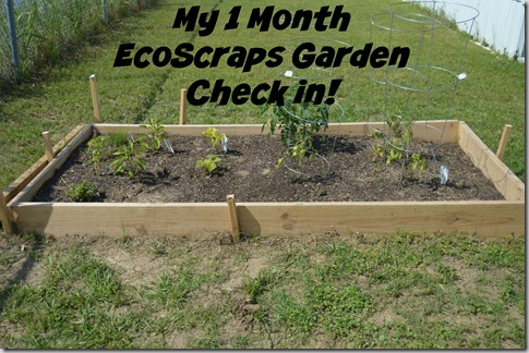 Checking in on My EcoScraps Garden After a Month!